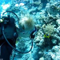 Alex mit Clarks-Anemonenfische, September 2002