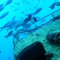 Die Fische haben die Giannis D. längst für sich entdeckt, September 2002