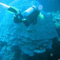 Clemens vor riesengroßem Korallenstock, März 2005