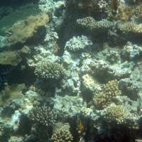 Korallengarten, Mai 2004