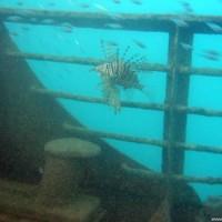 Ein-Rotfeuerfisch-auf-dem-Sonnendeck-September-2002