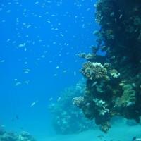 buntes Treiben am Riff, Mai 2007