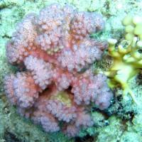 bunte Korallen, Mai 2007