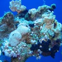 diverse Korallen und Schwämme, Mai 2007