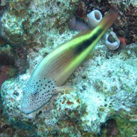 Korallenwächter, Mai 2007