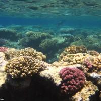 Korallenformationen im Flachwasserbereich, Mai 2007