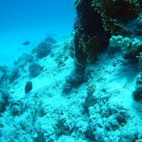 Am Fuß eines der Korallenblöcke, Mai 2004