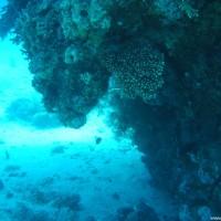Meist verjüngen sich hier die Korallenblöcke nach unten, Mai 2004