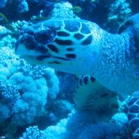 Schildkröte, Mai 2007