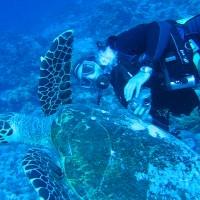 Joe und die Schildkröte, Mai 2007