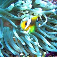 diverse Korallen, Mai 2007