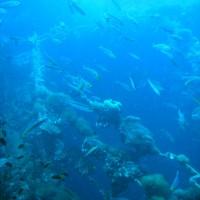 Fisch ohne Ende und ausnahmsweise auch ein klein wenig Struktur des Wracks, September 2006