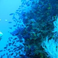 Fisch Fisch Fisch..., September 2006