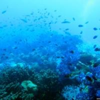 Nichts ist vom Wrack zu sehen, alles voller Korallen und Fischen, September 2006
