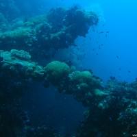 Überall ist die Yongala mit Weichkorallen überwuchert, September 2006