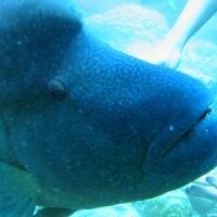 Der verrückte Fisch will tatsächlich gestreichelt werden, September 2006