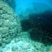 Bewuchs und Fischreichtum halten sich in Grenzen, April 2003