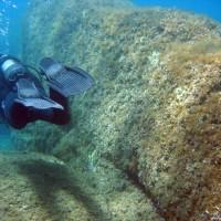Trotz wenig Bewuchs und Fischen interessant zu sehen, April 2003