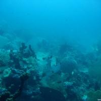 Blick über's trübe Riff, September 2007