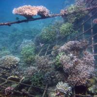 Metallkonstruktion des Projects, über und über mit Korallen bedeckt, September 2007