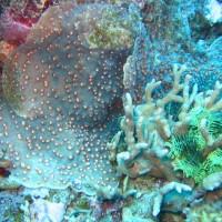 diverse Steinkorallen und Haarsterne, September 2007