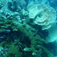 Korallen und Schwämme, September 2007