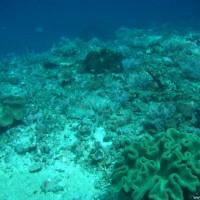 Hier trifft das kalte Wasser aus der Tiefe auf das warme Oberflächenwasser, Oktober 2007