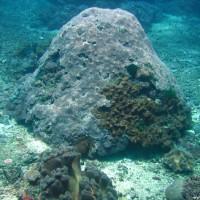 Korallenblock, Oktober 2007