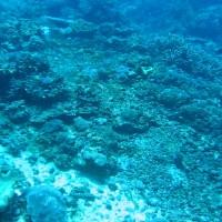 Buntes Treiben im Flachwasserbereich der Bucht, Oktober 2007