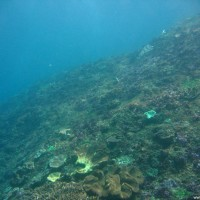 Eher trübes Wasser und wenig Korallen, Oktober 2007