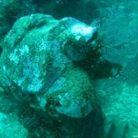Steinschildkröte, September 2007