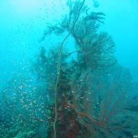 Fächerkorallen und mehr, September 2007