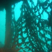 Auch hier hängen an einigen Stellen Fischernetze herum, September 2005