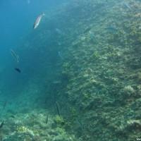 Viel Fisch und doch einiges an Bewuchs hier in der Nordadria, September 2005