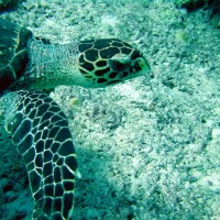 malediven2002_066