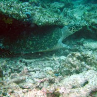 malediven2002_073