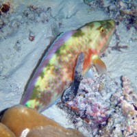 malediven2002_052