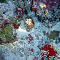 malediven2002_090