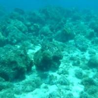 Schildkröte im Flachwasserbereich, April 2008