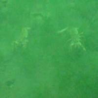 Zwei Flußkrebse, Oktober 2003