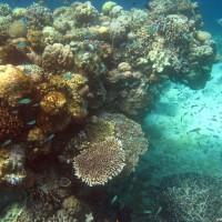 buntes Treiben am Riff, März 2007