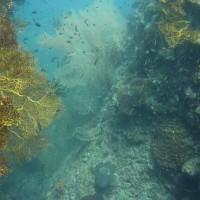schmaler Canyon mit Fächerkorallen, März 2010