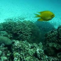 Schwenk über's Riff im tieferen Bereich, März 2010