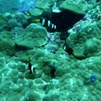 Clownsfische und Co, März 2010